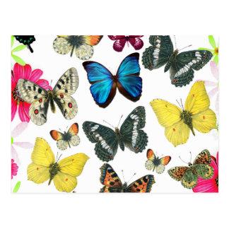 Mariposas coloridas del amarillo del rojo azul del tarjetas postales