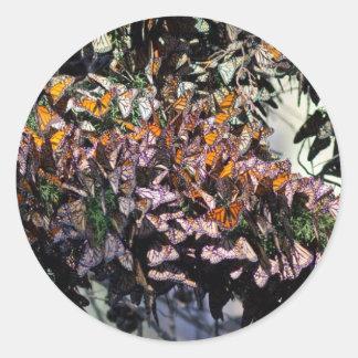 Mariposas de monarca pegatina redonda