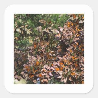 Mariposas de monarca calcomania cuadradas personalizadas