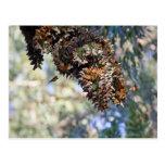Mariposas de monarca postal