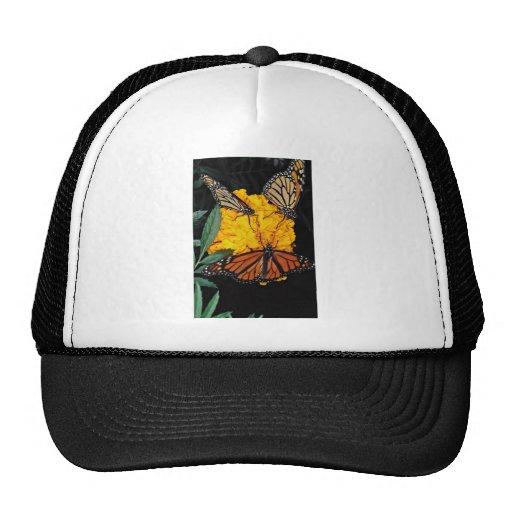Mariposas de monarca que alimentan las flores gorras