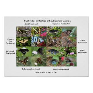 Mariposas de Swallowtail de Georgia del sudeste Impresiones