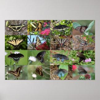 Mariposas de Swallowtail de Georgia del sudeste Póster