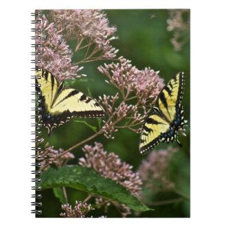 Mariposas de Swallowtail del tigre en la mala hier Spiral Notebook