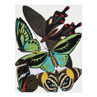 mariposas del art déco postal