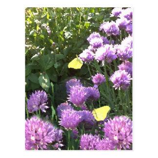 Mariposas del azufre en el jardín de hierbas tarjeta postal