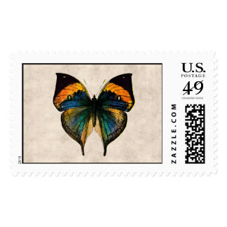 Mariposas del ejemplo 1800's de la mariposa del sellos