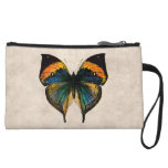 Mariposas del ejemplo 1800's de la mariposa del vi
