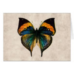 Mariposas del ejemplo 1800's de la mariposa del vi felicitación