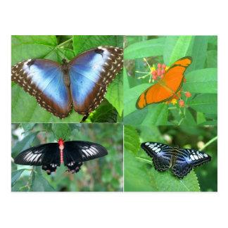 Mariposas del mundo tarjetas postales