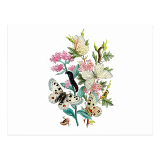 Mariposas del verano postal