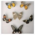 Mariposas dispersadas azulejo cuadrado grande