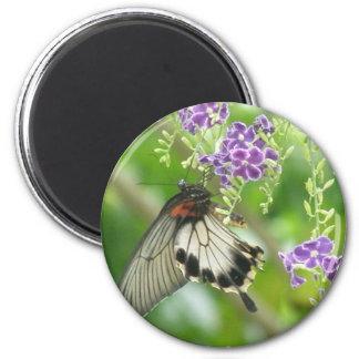 Mariposas e imán de las flores