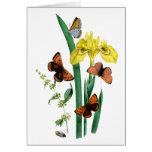 Mariposas e iris amarillo tarjetón