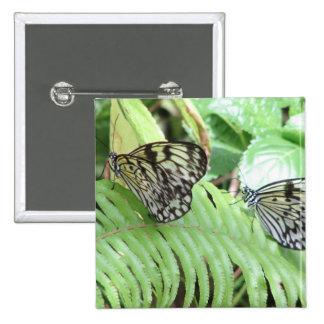 Mariposas en el Pin del helecho