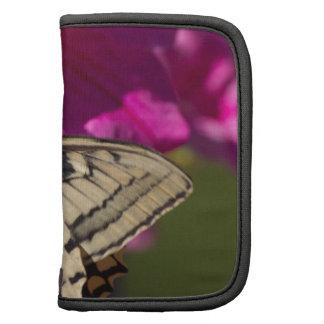 mariposas en la flor planificador