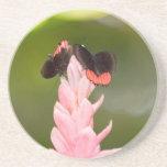 Mariposas en la flor rosada posavasos para bebidas
