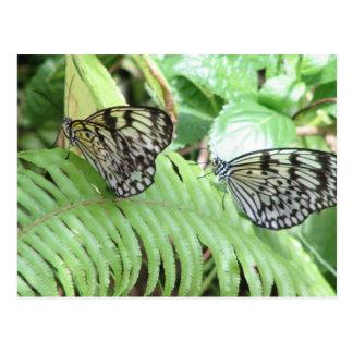 Mariposas en la postal del helecho