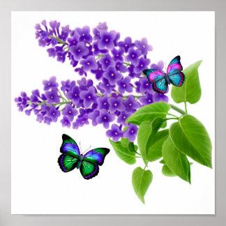 Mariposas en las flores de la lila posters