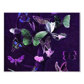 Mariposas en púrpura fotografía