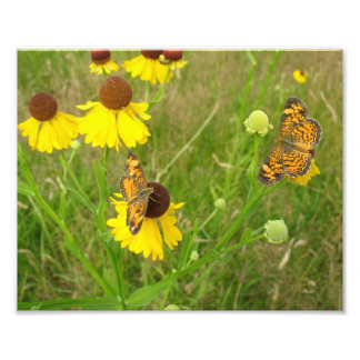 Mariposas, foto de Nueva Inglaterra 8x10 Cojinete