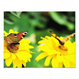 Mariposas - foto fotografías