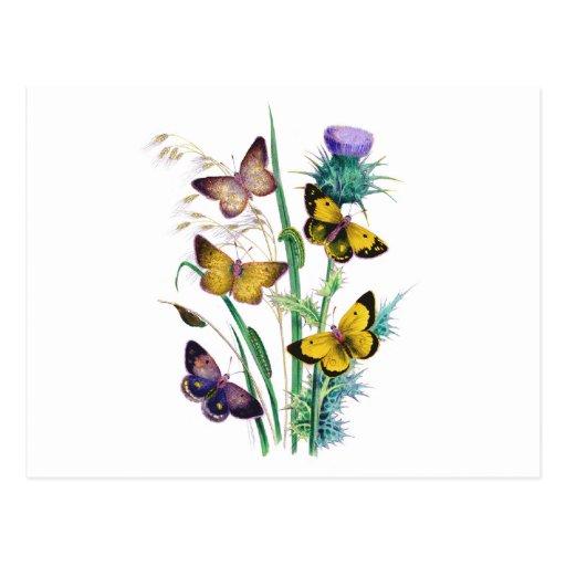 Mariposas hermosas postales
