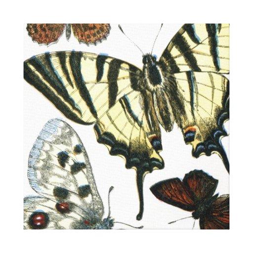 Mariposas Impresion En Lona