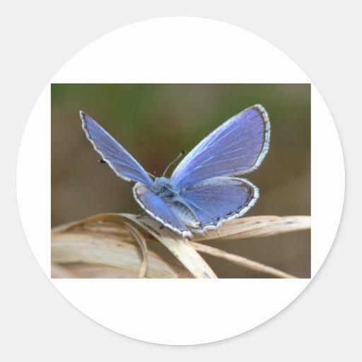 mariposas mr.blue pegatina redonda