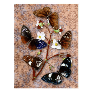 Mariposas orientales con el fondo del damasco del postal