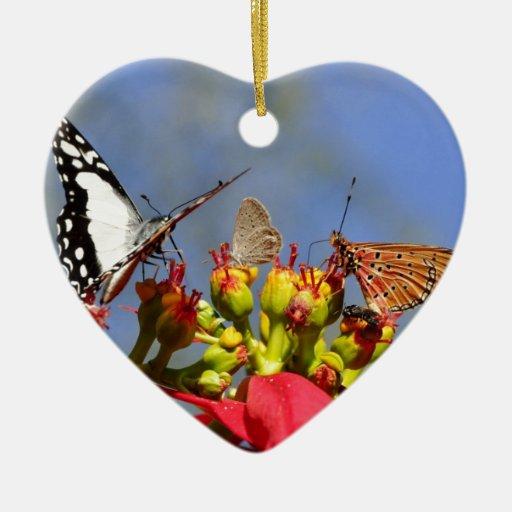 Mariposas Ornamente De Reyes