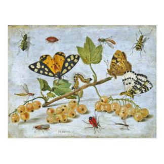 Mariposas, oruga y frutas tarjetas postales