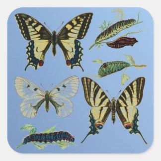Mariposas, orugas y polilla de Swallowtail Pegatina Cuadrada