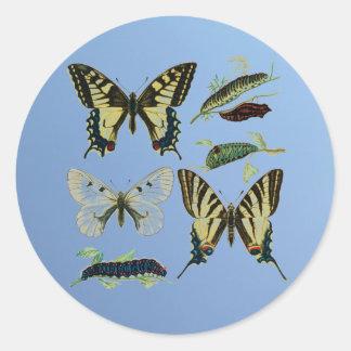 Mariposas, orugas y polilla de Swallowtail Pegatina Redonda