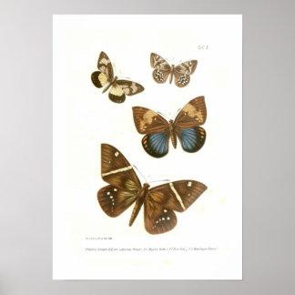 Mariposas Posters