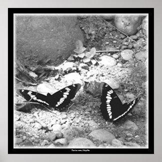 Mariposas Impresiones