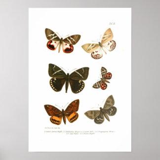 Mariposas Poster