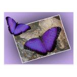Mariposas púrpuras postal