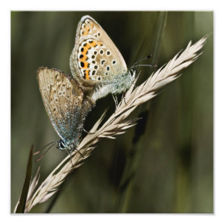 "mariposas traviesas 12"" X12 '' Fotografías"