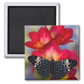 Mariposas tropicales 2 de Sammamish Washington Imán Para Frigorifico