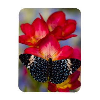 Mariposas tropicales 2 de Sammamish Washington Imán