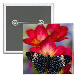 Mariposas tropicales 2 de Sammamish Washington Pin Cuadrada 5 Cm
