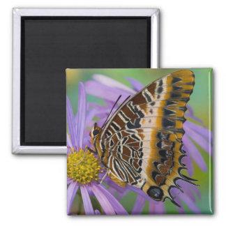 Mariposas tropicales 3 de Sammamish Washington Imanes De Nevera