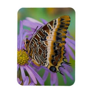 Mariposas tropicales 3 de Sammamish Washington Iman Flexible