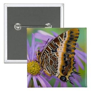 Mariposas tropicales 3 de Sammamish Washington Pin Cuadrada 5 Cm