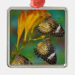 Mariposas tropicales del Lacewing del leopardo (Ce Ornato