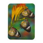 Mariposas tropicales del Lacewing del leopardo (Ce Imán Rectangular