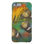 Mariposas tropicales del Lacewing del leopardo Funda De iPhone 6 Barely There