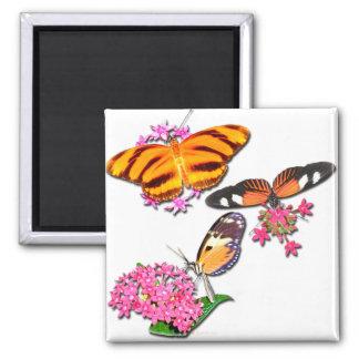 Mariposas tropicales iman de frigorífico