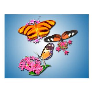 Mariposas tropicales postales